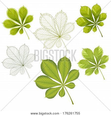 colorful mosaic chestnut leaves. isolated. easy to modify. vector illustration.