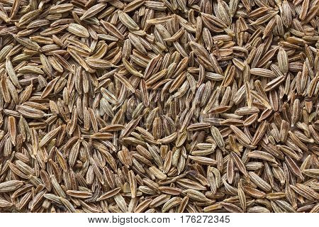 Grains of ziri (cumin) closeup view from above
