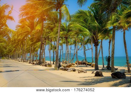 Coconut palm tree on the tropical beach at daytime.