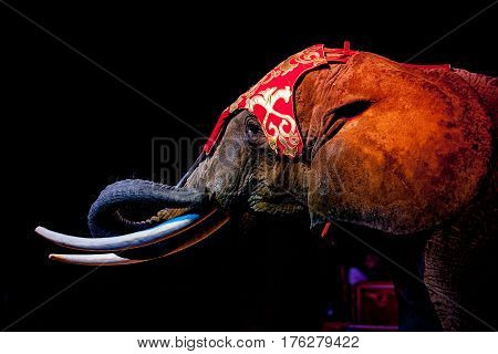 circus elephant on black background portrait view