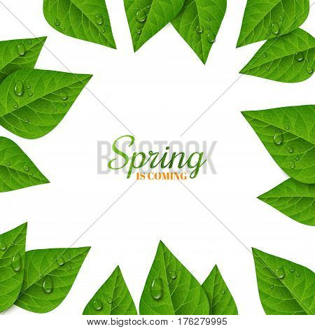 Frame with green leaves and water drops on white background. Morning dew, fresh spring foliage. Vector illustration. Spring is coming concept