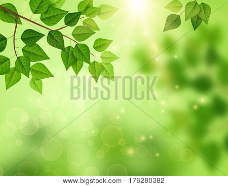 Forest background with sun light coming through the green leaves. Vector illustration. Green backdrop with fresh spring foliage, sparkles and sunbeams, pollen in the air