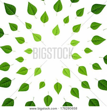 Frame with green leaves on white background, top view, flat lay. Fresh spring foliage. Vector illustration.