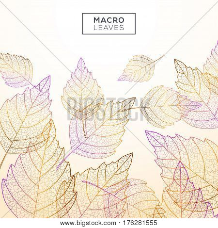 Background with birch leaves macro texture. Yellow and orange colors. Vector illustration. Environment and ecology concept frame with place for text. Autumn background.