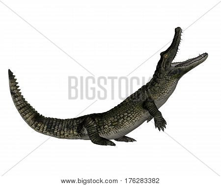 Caiman roaring up isolated in white background - 3D render