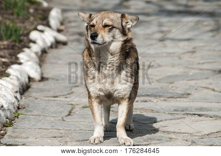 Small mongrel mixed breed dog on stone darden surface