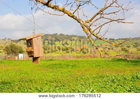 Birdhouse. Tree. Nature. Garden. Spring. Sky. Nobody.