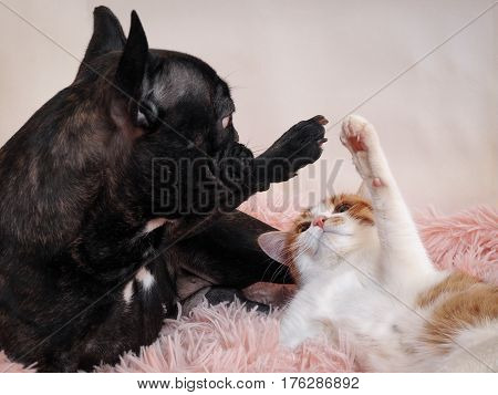 Cat and dog playing on the bed. Paws animal