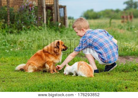 Little Boy Feeds Homeless Cat And A Stray Dog, The Dog Sniffs The Food And Do Not Wants To Eat