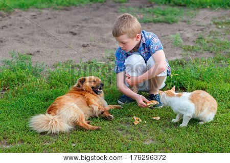 Smiling Little Boy In A Plaid Shirt Feeds Homeless Cat And Redhead Stray Dog In The Yard, Dog Lies,