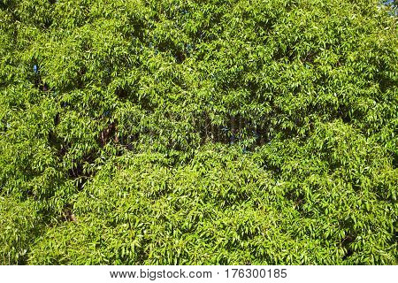 Natural Background With Willow Branches