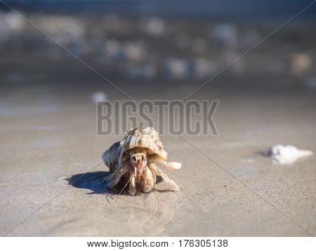 Hermit crab in Sirinat National Park Phuket Thailand