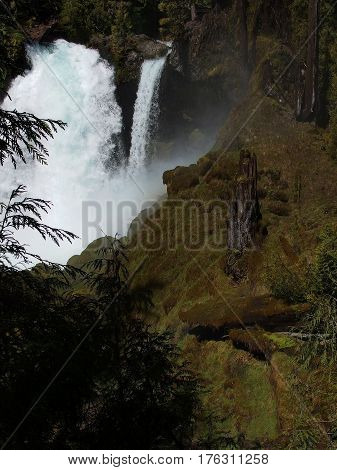 Water from the McKenzie River in Western Oregon rushes over the cliffs at Sahalie Falls in large quantity from spring runoff with trees and the moss covered rocks of the forest.