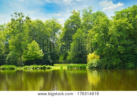picturesque lake summer forest on the banks and sky