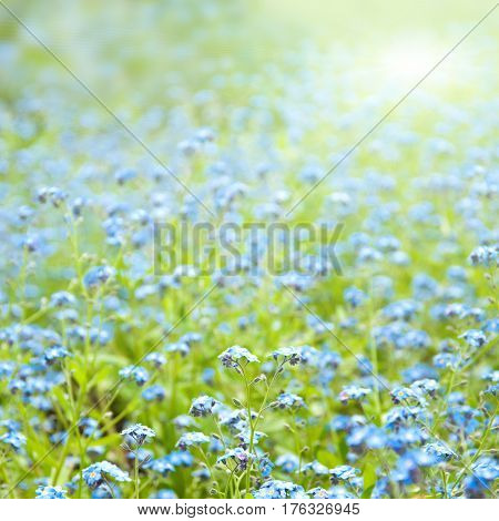 Sunny Flowers Spring Background