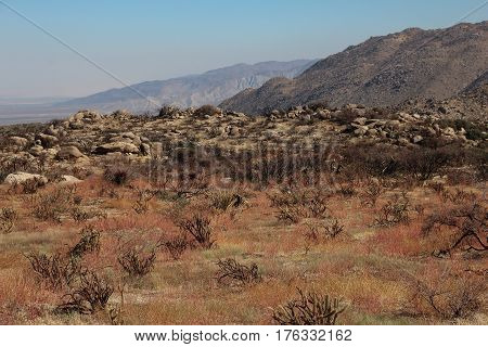 Early spring view across Culp Valley, with its colorful grasses and boulders, to distant blue mountains in the Anza Borrego Desert State Park in California.