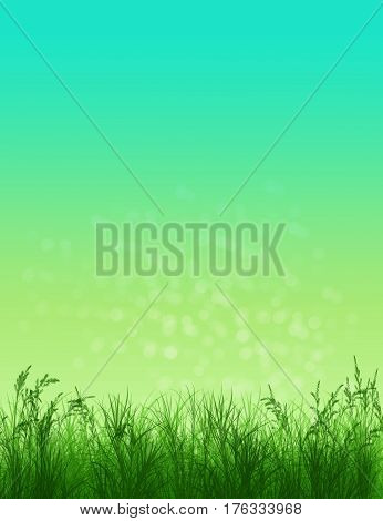 Spring background. Grass in sunlight. Natural background with bokeh. Summer. A park. Regeneration. Close-up. Nature awoke
