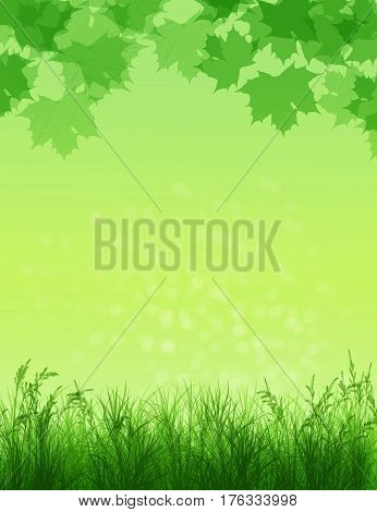Spring background. Grass in sunlight.Natural background with bokeh. Summer. A park. Regeneration. Close-up. Nature awoke