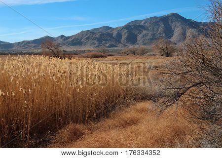 A rare desert ecosystem, the marsh at Sentenac Cienega, in the Anza Borrego Desert State Park, California, with view of Granite Peak.