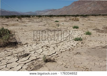 Mud drying and curling up in irregular polygonal pieces in a gully in the Anza Borrego Desert, California, with Santa Rosa Mountains.