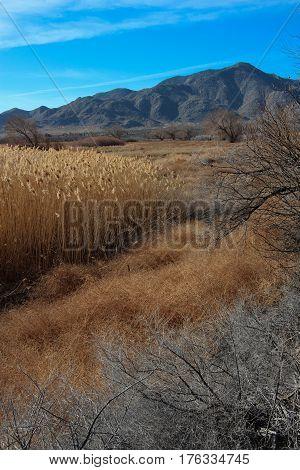Sentenac Cienega, a rare grass-filled marsh in a desert, looking towards Granite Mountain, in Anza Borrego Desert State Park, California