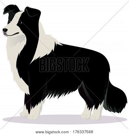 Border Collie dog black and white vector illustration