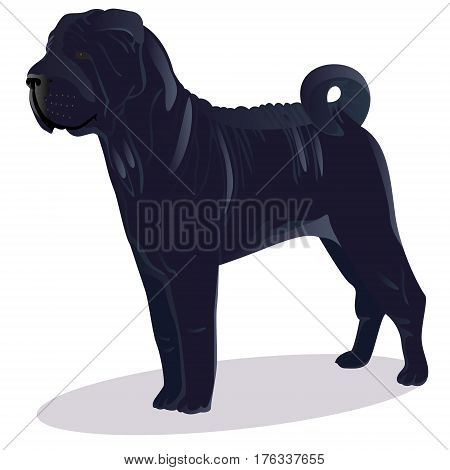 Chinese shar pei dog blue vector illustration