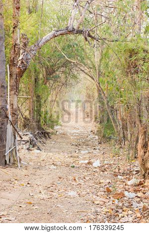 road in countryside with trees in thailand