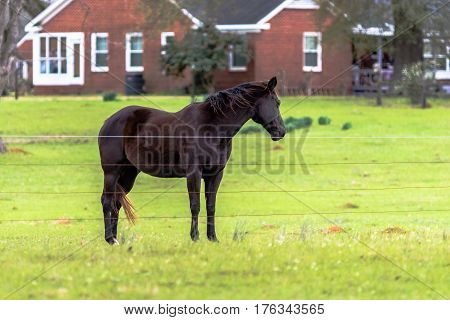 Brown horse standing behind high tensile wire fence with red house in the background