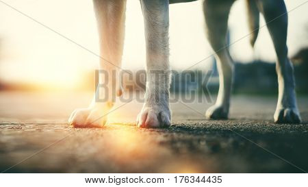 the paws of a dog in the sunlight