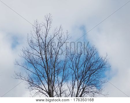 A tree bereft of leaves lifts its branches toward patched of blue in a cloud-filled winter sky.