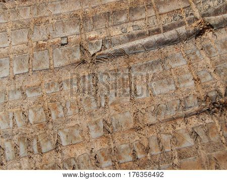 Closeup of a tree trunk texture background