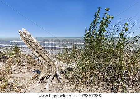 Sand Dune And Tree Stump Next To Lake Huron