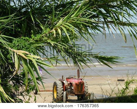 A focused tree, with a tractor on a beach background in Kiyu, Uruguay.