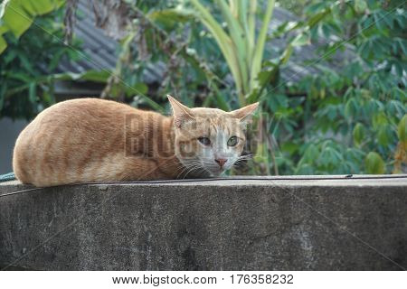 poor blind cat on the concrete wall