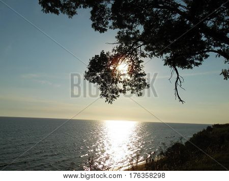 A sunset on the beach, sunbeams through a tree.