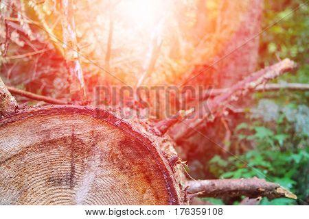 Tree trunk cross section in sunlight .