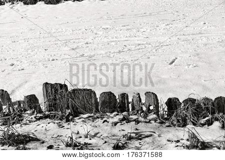 rotten and mouldering fencing from wooden stubs and snow of monochrome tone