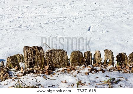 rotten and mouldering fencing from wooden stubs and snow