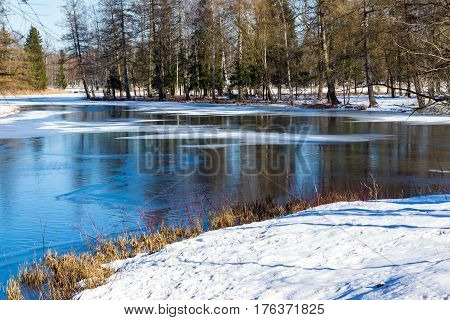 spring landscape of the forest lake with thawed snow and bright sunny day
