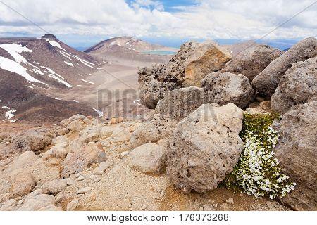 Alpine Volcanic Landscape Tongariro Np Nz