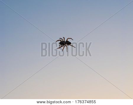 Spider Anthropod Animal
