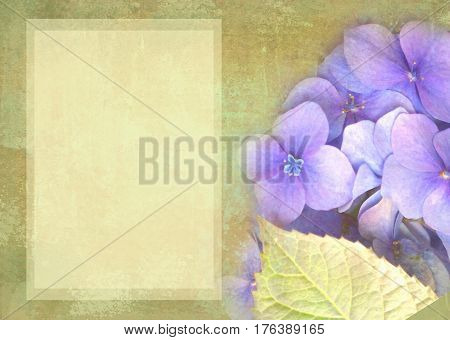Floral postcard. Can be used as greeting card invitation for wedding birthday and other holiday happening. Hydrangea flowers. Art floral grunge background. Beautiful hydrangea with copy space.