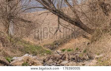 Large tree growing out of the bank of a small stream and leaning over the stream with branches extending into another tree