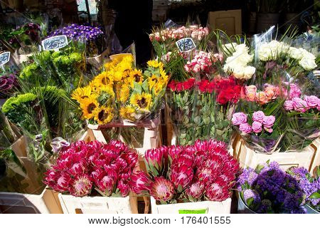 London, United Kingdom - April 17, 2016: Columbia Road Flower Sunday market. Street traders are selling their stock, people choosing flowers