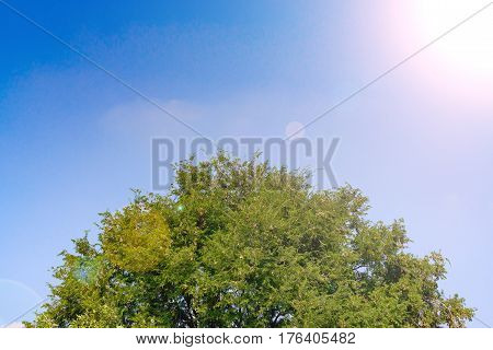 Beautiful Tree And Green Leaf On Sky Background.