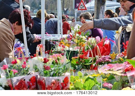CLUJ-NAPOCA ROMANIA - March 8 2017: People buy flowers at the flower market in spring