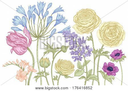 Hand drawing of leaves, branches, spring flowers tulip, African lilies, ranunculus, anemones, lilac, freesia pastel color on white background. Vector illustration art floral design. Vintage engraving