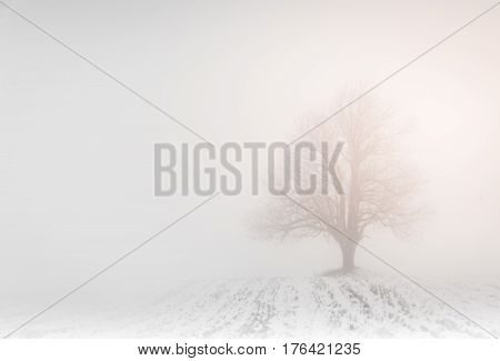 Lonely tree in the fog in the winter