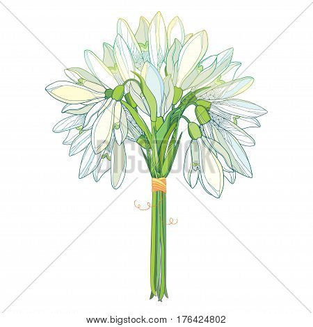 Vector bouquet with outline Snowdrop flowers or Galanthus in pastel colors isolated on white background. Ornate floral elements for spring design. Bunch of Snowdrops in contour style.